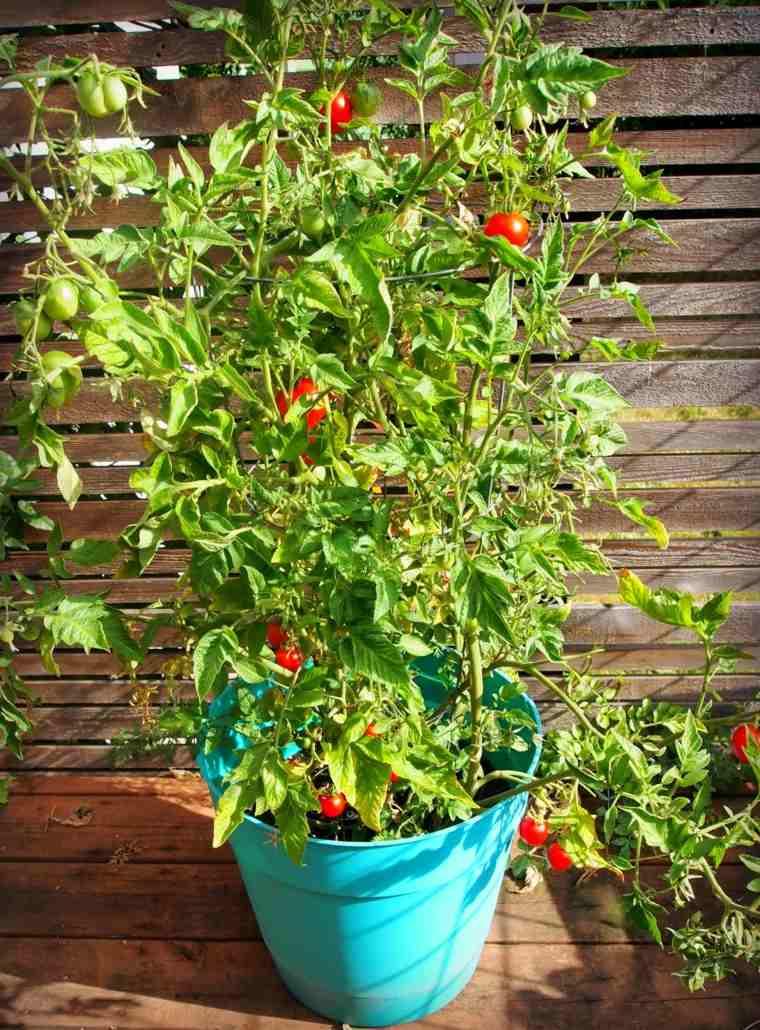 frutas y verduras cultivar macetas tomates chery ideas