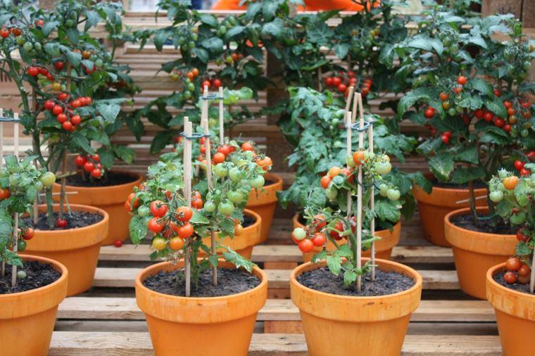frutas y verduras cultivar macetas tomates ideas