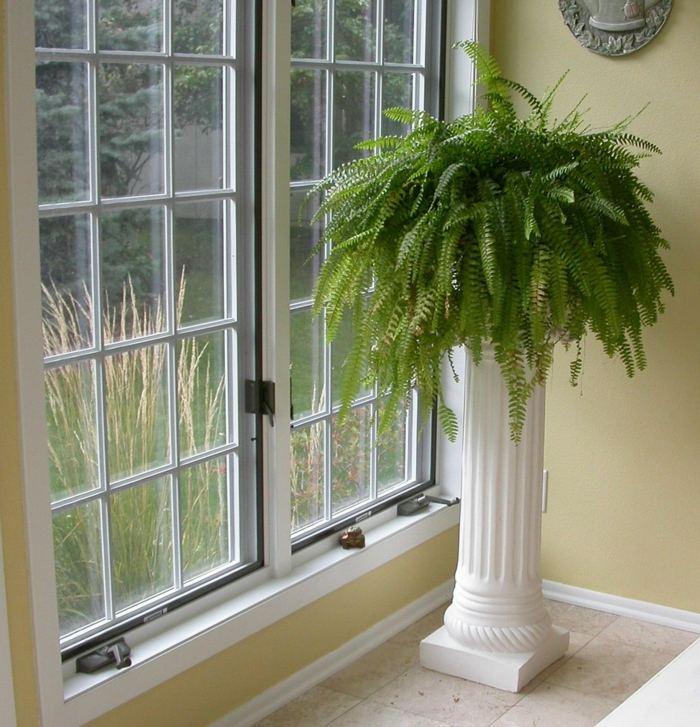helecho comun plantas interior resistente cerca ventana ideas