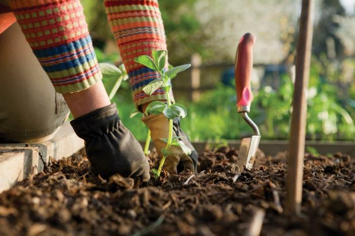 herramientas de jardineria suelos plantaciones corto