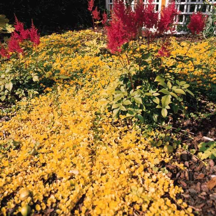 jardin decorado floresa marillas