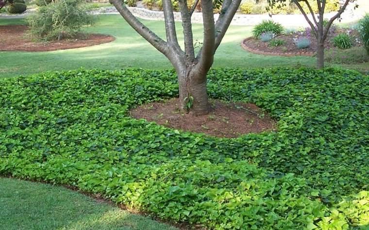 jardin decorado plantas tapizantes suelo