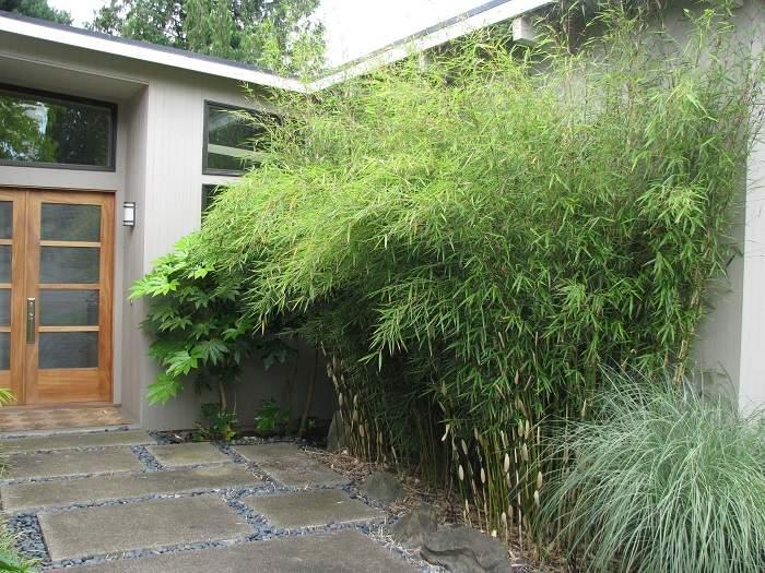 lento crecimiento plantas invasivosno en tradas
