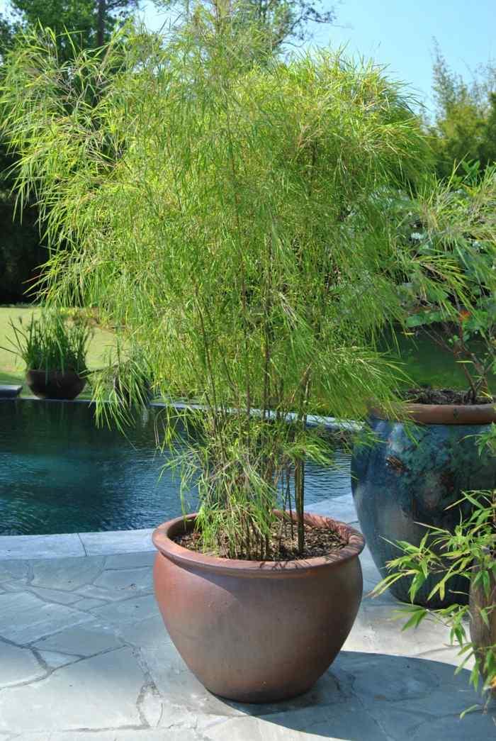 macetas crecimientos pinos elegantes piscina