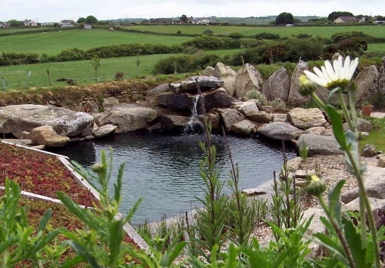 rocalla piscina natural plantyas