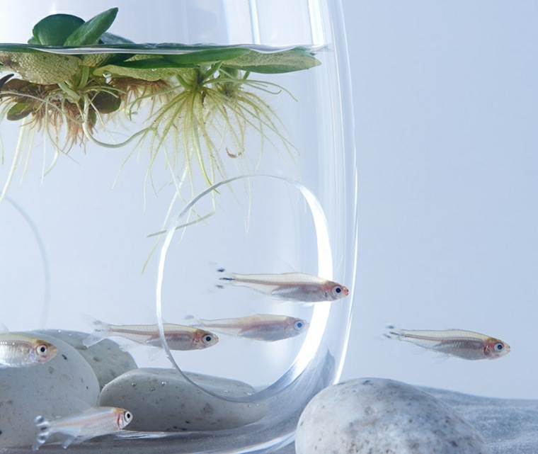 Impresion 3d adornos para acuarios de haruka misawa for Acuarios originales