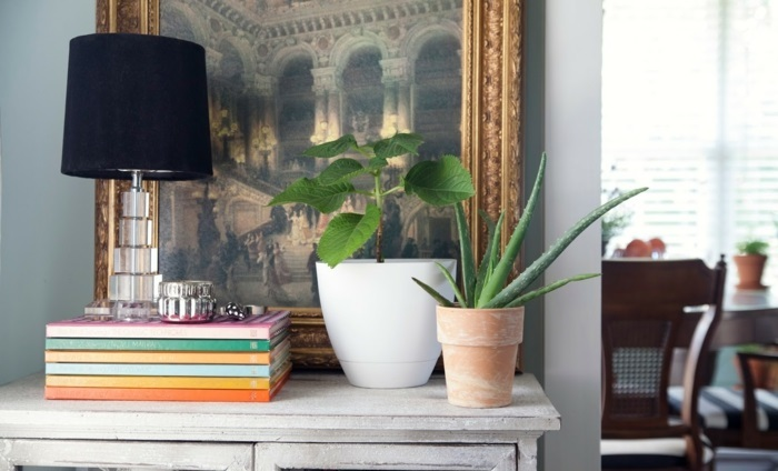 Plantas de interior resistentes 10 ideas y consejos - Como cuidar una planta de aloe vera en casa ...