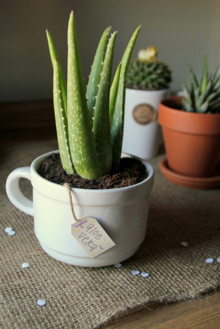 plantas de interior resistentes aloe vera ideas
