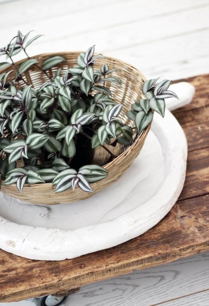 plantas de interior resistentes amor de hombre cesto ideas
