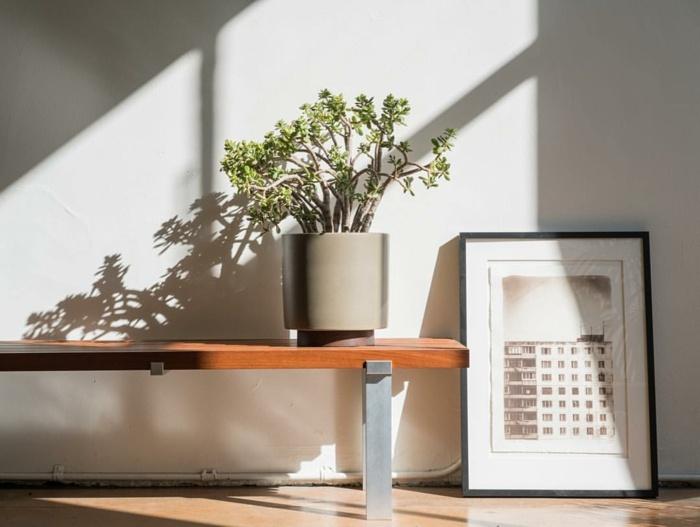 plantas-de-interior-resistentes-arbol-de-jade-interior-diseno