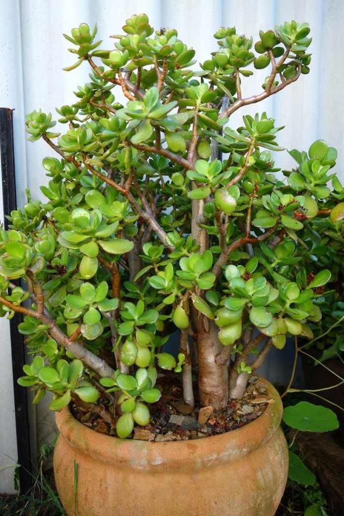 Plantas de interior resistentes 10 ideas y consejos - Plantas resistentes al sol ...