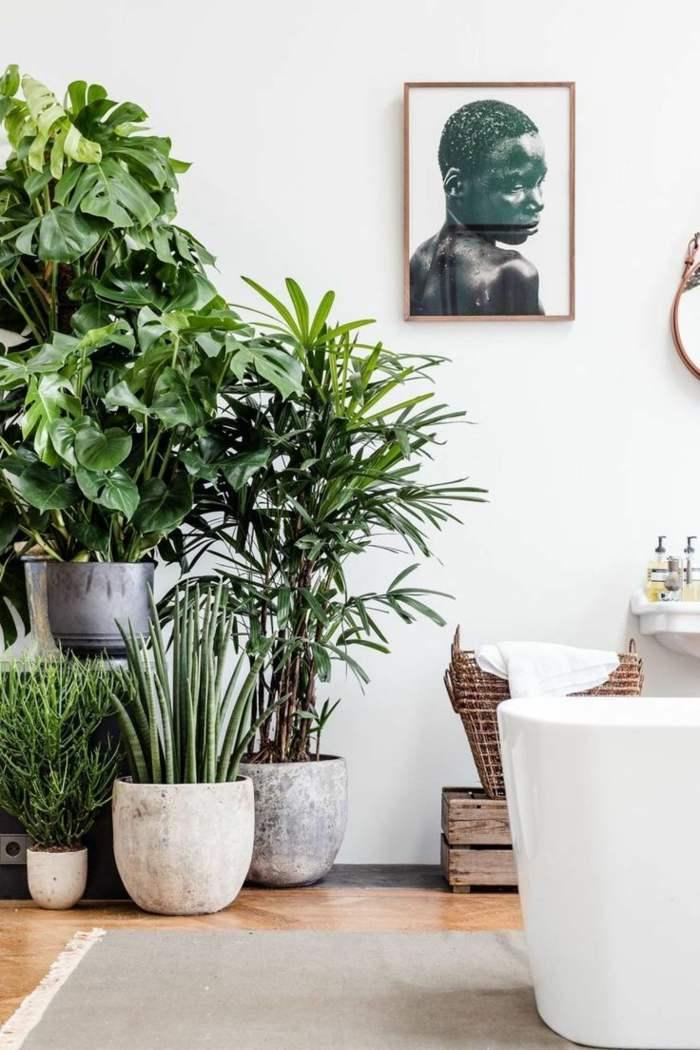 plantas de interior resistentes costilla de adam junto otras plantas ideas