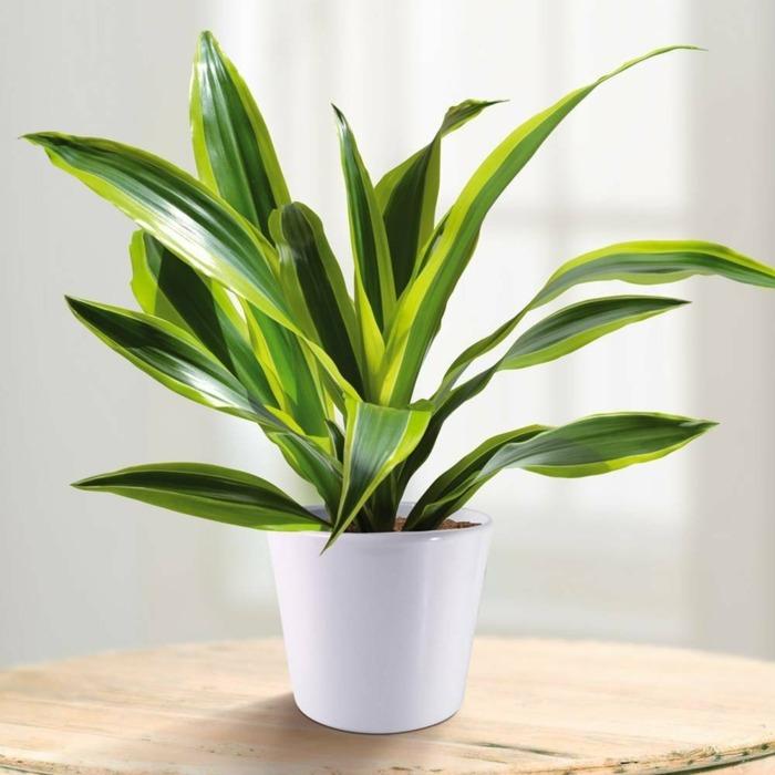 Plantas de interior resistentes 10 ideas y consejos - Plantas venenosas de interior ...