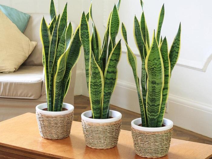 Plantas de interior resistentes 10 ideas y consejos - Plantas para salon ...