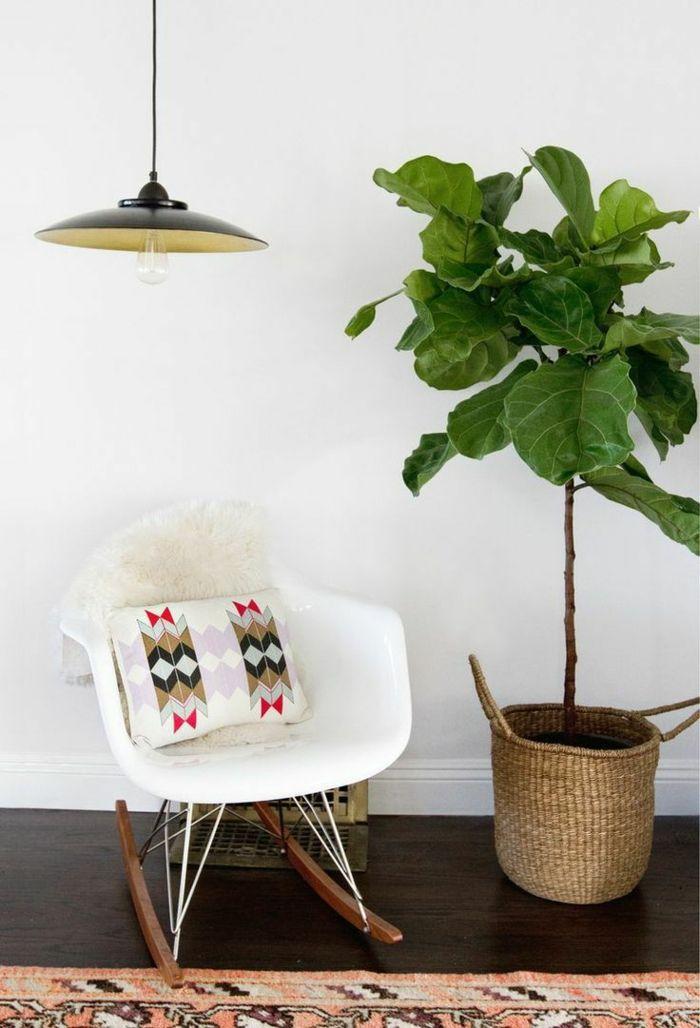 plantas de interior resistentes ficus silla ideas