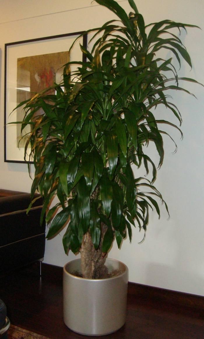 Plantas de interior resistentes 10 ideas y consejos - Plantas de interior grandes ...