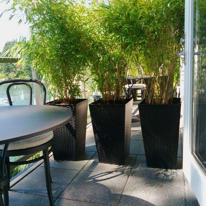 bambu ambientes elegantes muebles muros