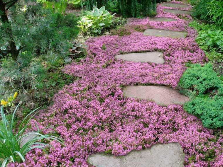 suelo jardin repleto florecillas rosas