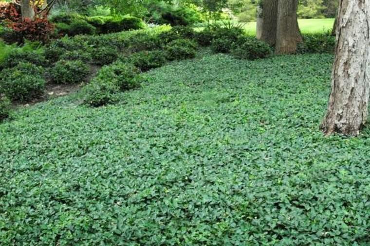 suelo jardin cubierto plantas tapizantes
