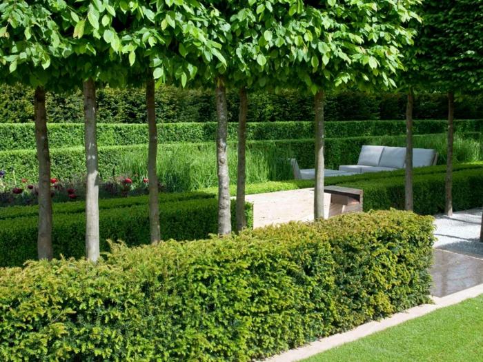 verdes plantas escenarios colores flores