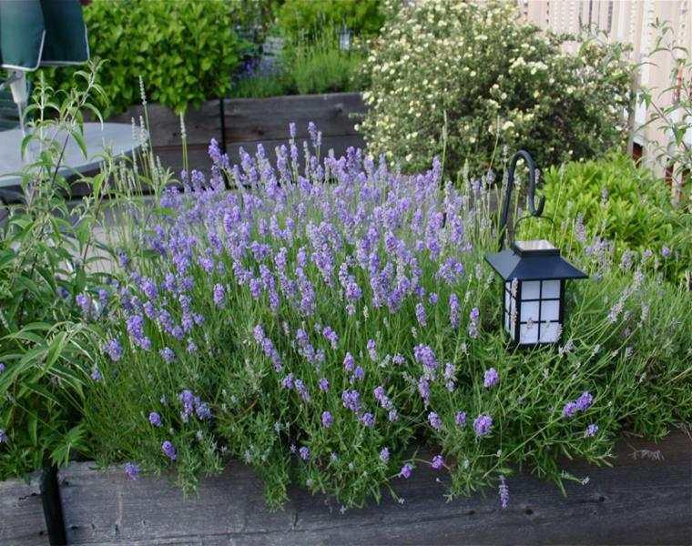 bonita decoración plantas terraza