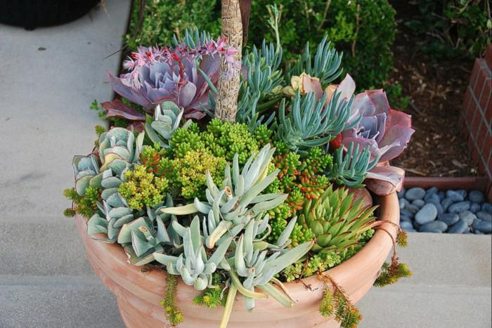 Plantas suculentas para decorar la terraza 24 ideas for Varias plantas en una maceta