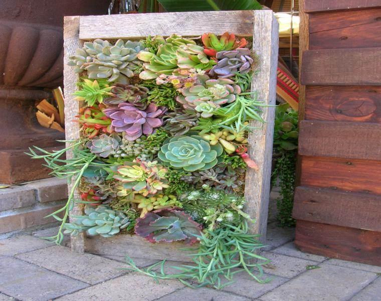Plantas suculentas para decorar la terraza - 24 ideas geniales -
