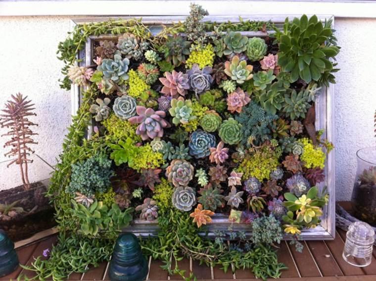 bonito jardin vertical plantas suculentas