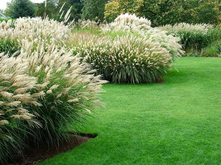 bonito jardin plantas arbustos