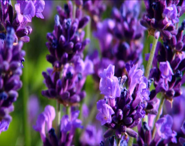 bonitos colores planta flor
