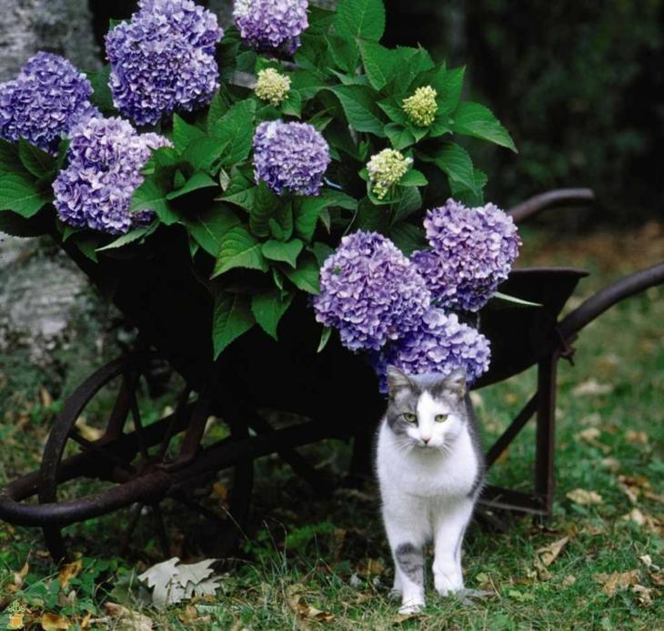carretilla plantadas suelo fuentes gato