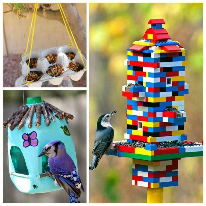 coloridos comederos aves especiales diversas