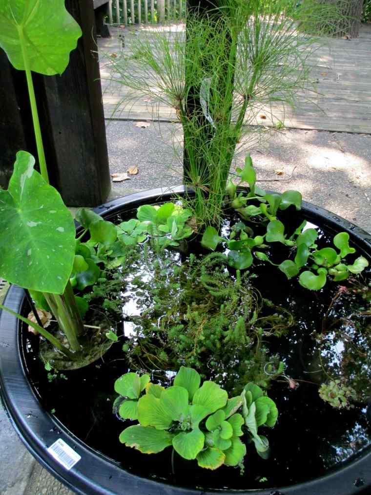 cuenco fuente agua jardin plantas