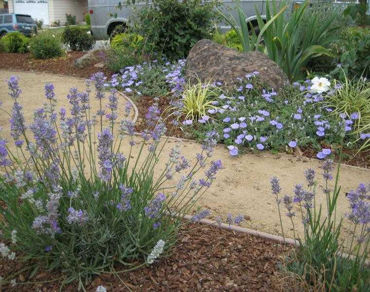 decorar jardines modernos lavandula