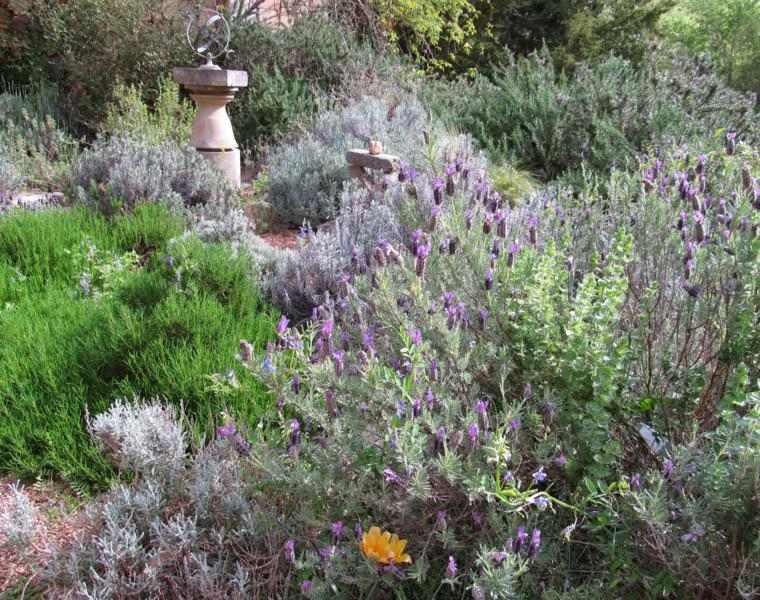 estupendo jardin muchas plantas lavandas