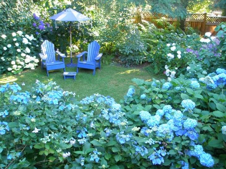 hortensias ideas patio muros azules