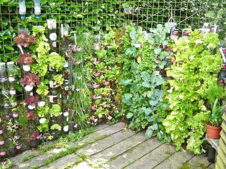 huerto maneras plantar vegetales hierbas botellas plastico ideas