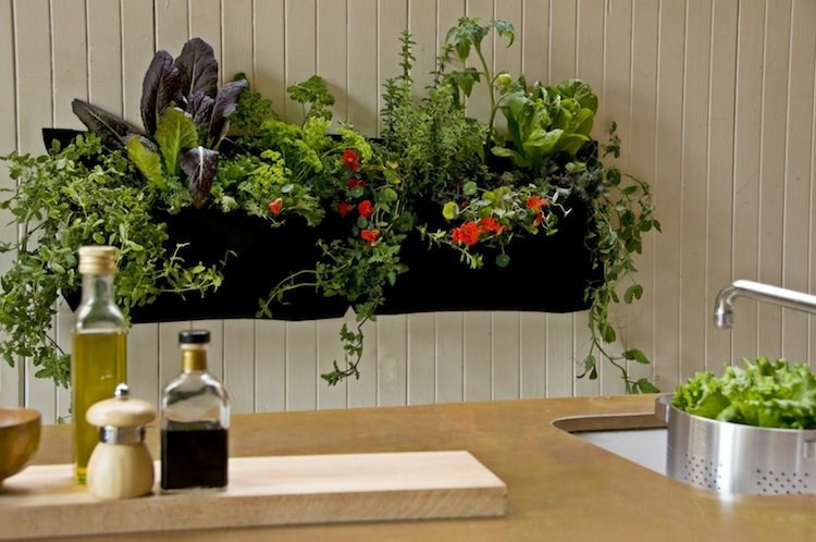 huerto maneras plantar vegetales hierbas coicna pared ideas