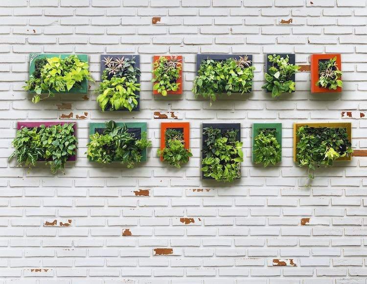 huerto maneras plantar vegetales hierbas opciones decorativas ideass