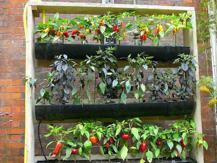huerto maneras plantar vegetales hierbas pimientos ideas