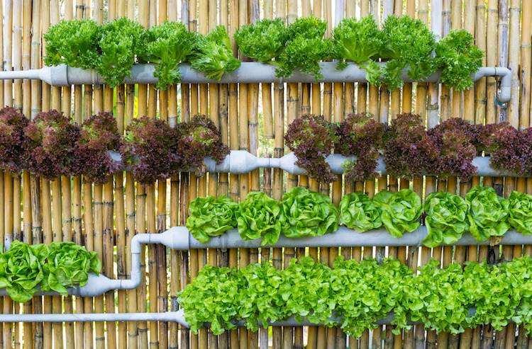 huerto maneras plantar vegetales hierbas riego ideas interesantes