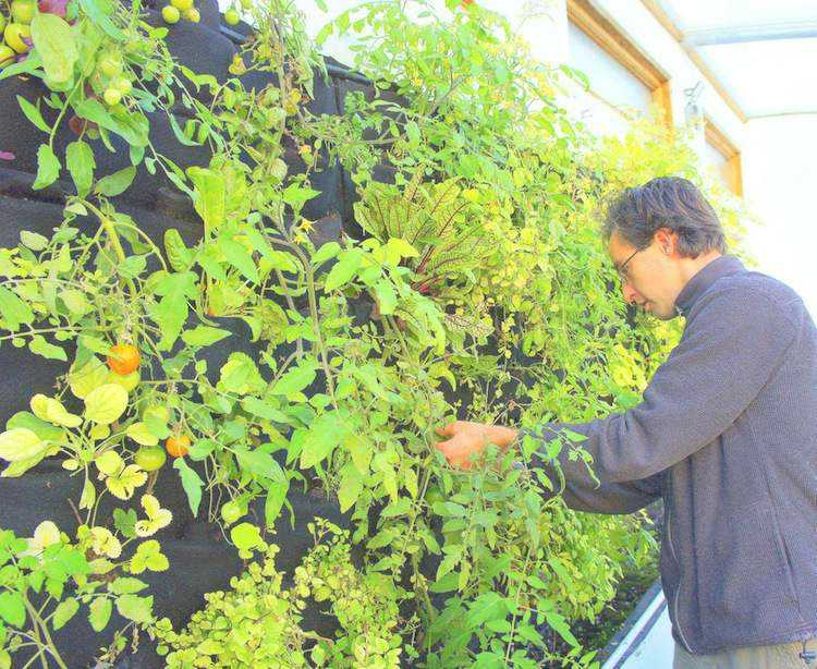 huerto maneras plantar vegetales hierbas tomates ideas