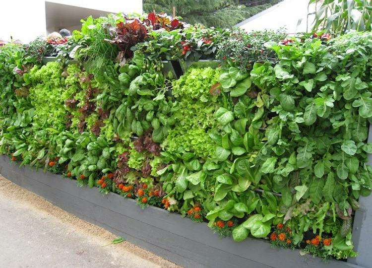 huerto maneras plantar vegetales hierbas valla jardin ideas