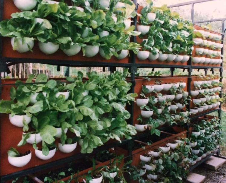 huerto vertical maneras plantar vegetales hierbas espacios amplios ideas