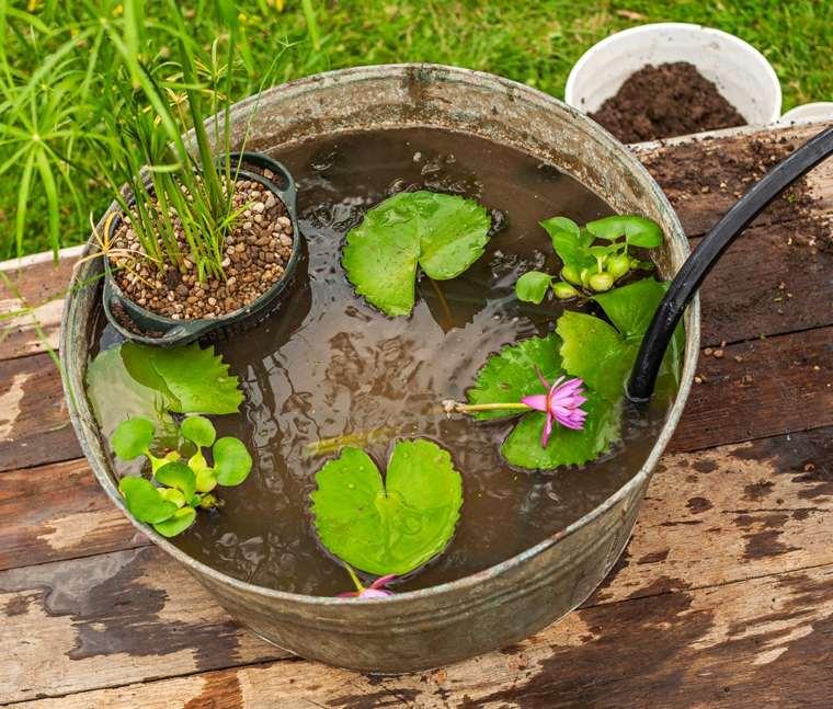 ideas hacer-mini estanque plantas