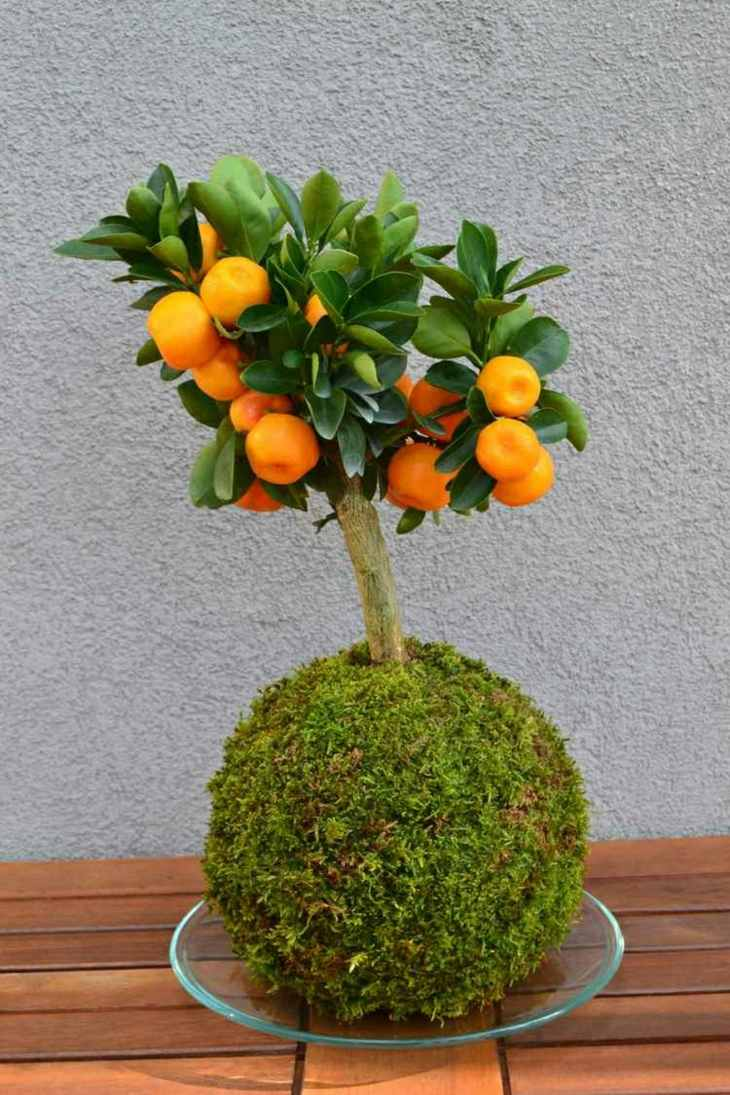 ideas japonesas bonsai colores frutas