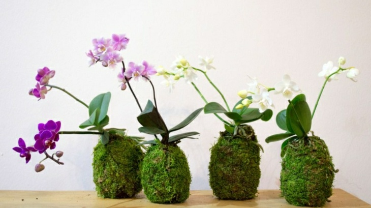 ideas japonesas flors salones calidos