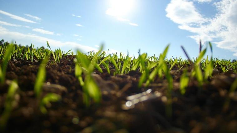 imagen cesped creciendo la tierra