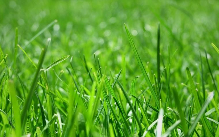imagen cesped verde cerca jardin
