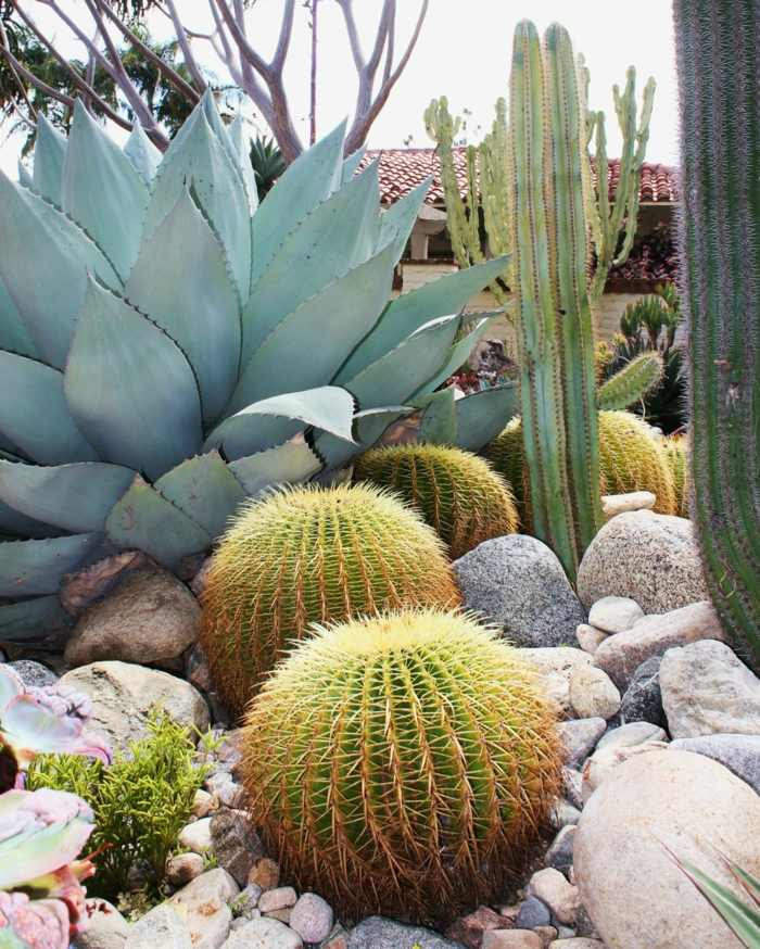 jardin de cactus blanco piedras rocas